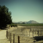 vinicola-concha-y-toro