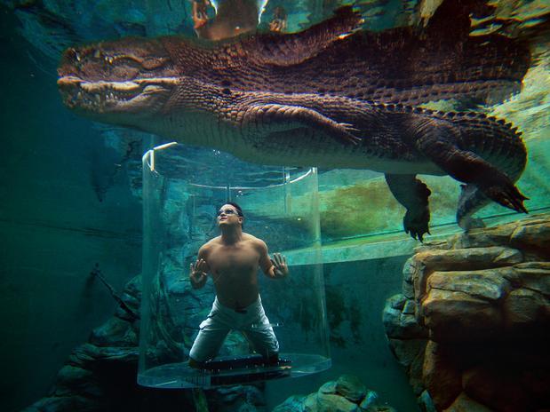 13-crocosaurus-coveaustraliadiv