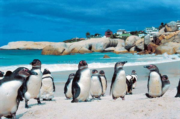 9 - Boulders Beach, Cidade do Cabo, África do Sul