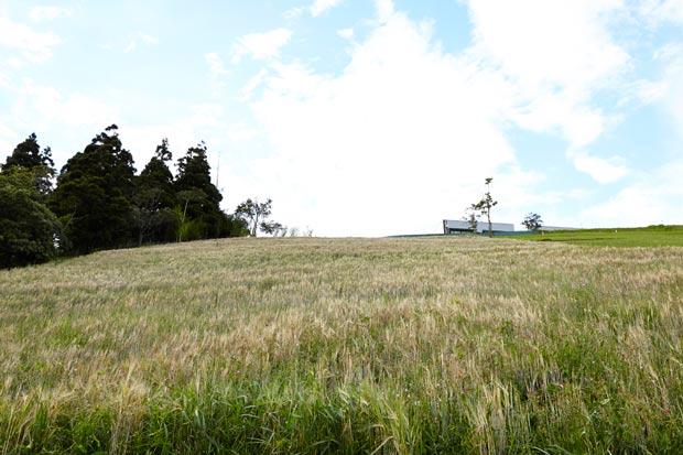 Foto Plantação Granja Comary