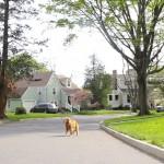 Está sem tempo para passear com o seu cachorro? Use um drone!