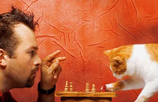 Amantes de gatos são mais inteligentes que amantes de cães, segundo estudo.