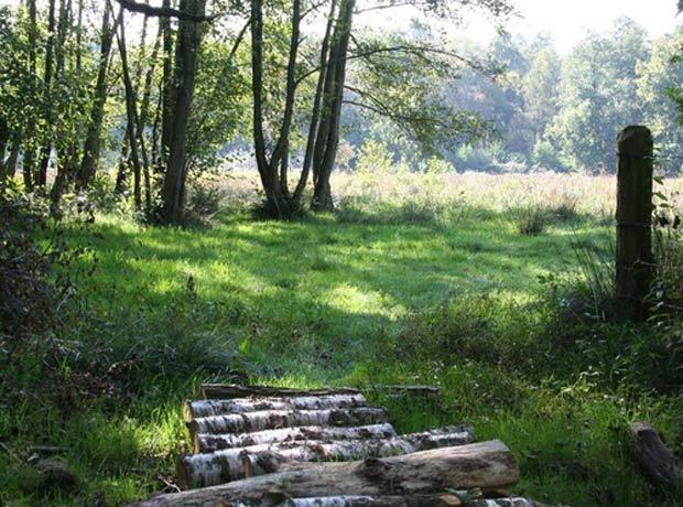 troncos-floresta
