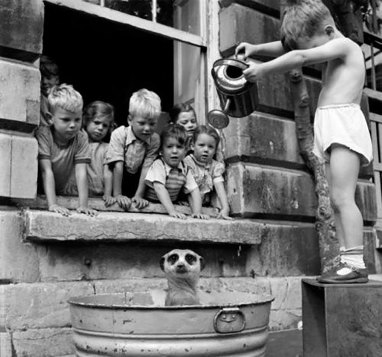 banho-bichinho-criancas