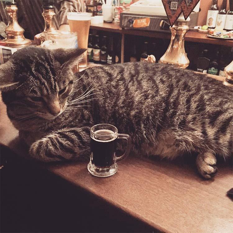 gato-pub-chope