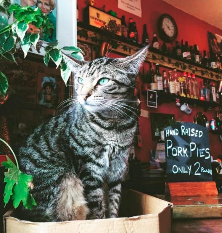 pub-gatos-inglaterra3