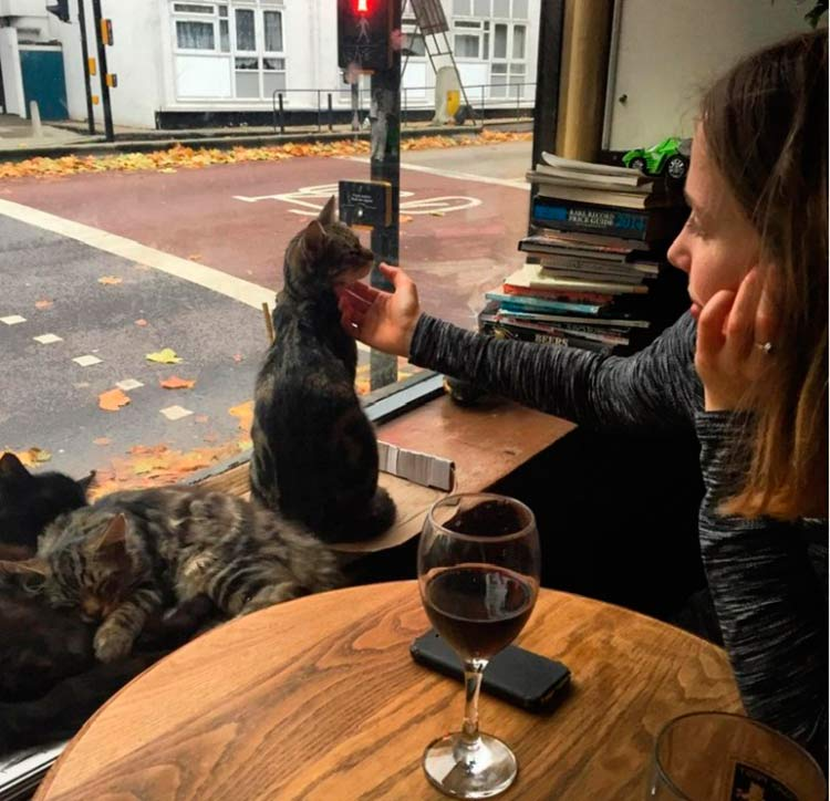 pub-gatos-inglaterra4