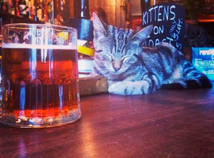 pub-gatos