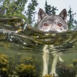 """Something's Fishy"", por Ian McAllister."