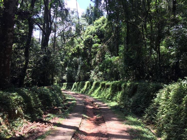 caminho-lago-das-carpas