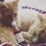 vinho-gato