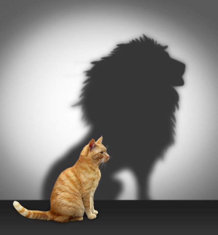 gato-sombra-leao