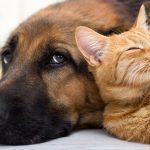 adotar-animais