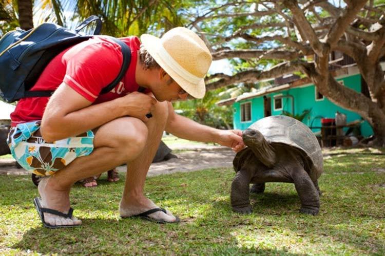 amizade-tartaruga-gigante