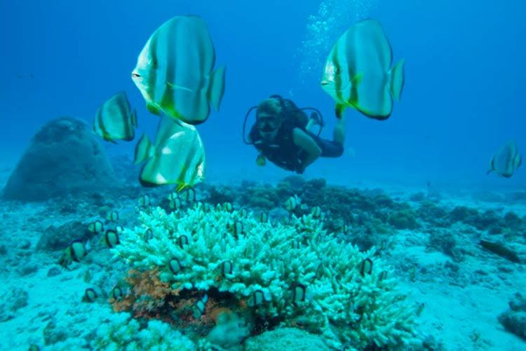 mergulho-seychelles
