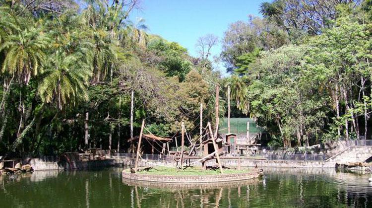 bosque-dos-jequitibas