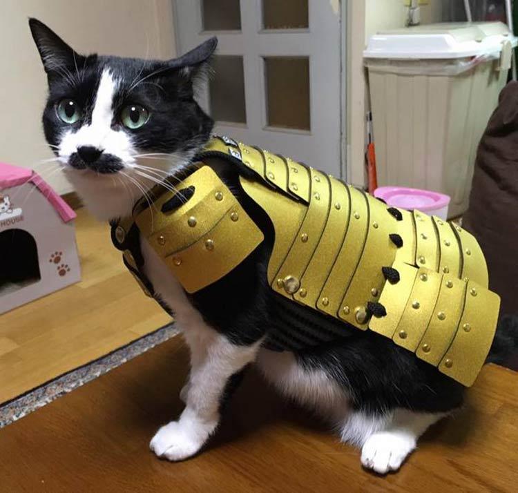 armadura-pet-1
