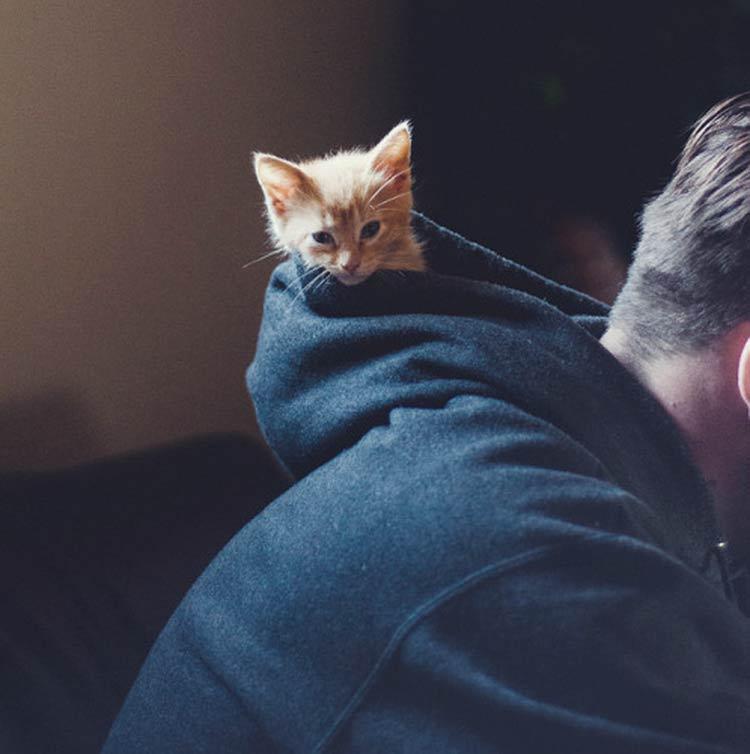 cat-tumblr
