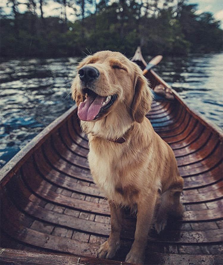 dog-style-tumblr