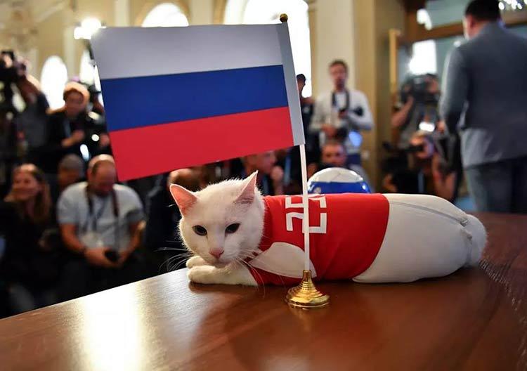 gato-aquiles-russia