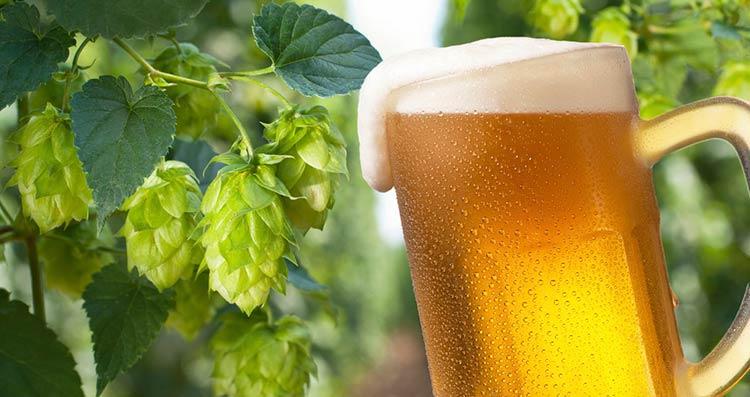 IPA-cerveja