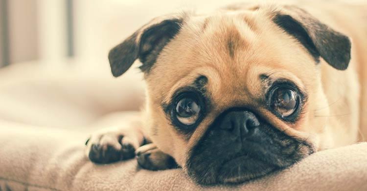 cachorro-dog