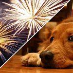 dog-fogos-artificios