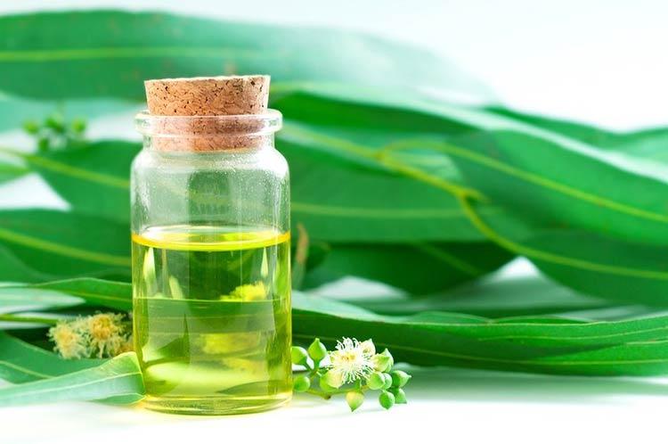 oleo-eucalipto