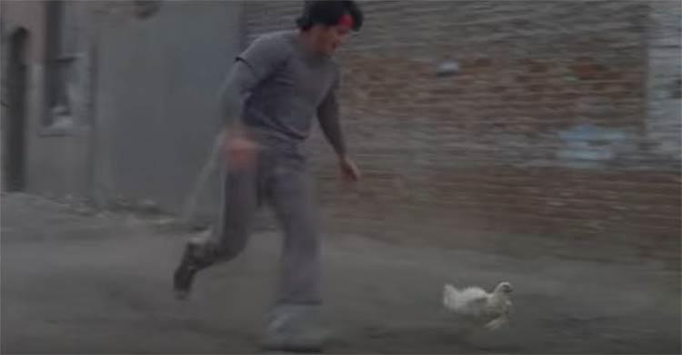 rocky-galinha